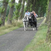 Horse carriage tour in Bruges' surroundings