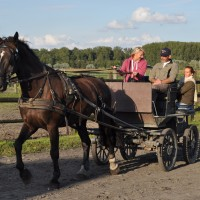 Horse driving Clinic Bruges